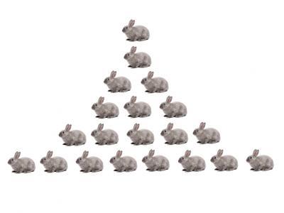Fibonacci konijnen