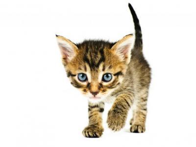 Kat miauwen