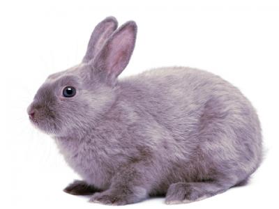 Waarom een konijn geen knaagdier is.